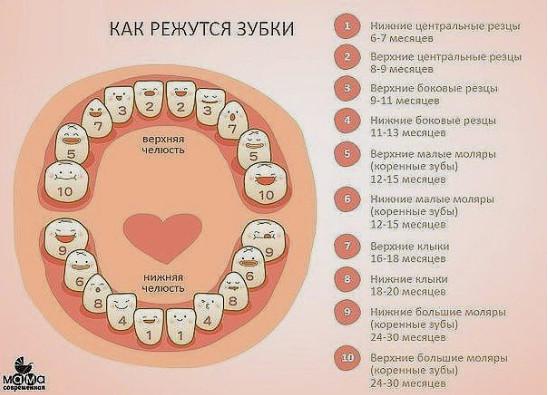 Как режутся зубки