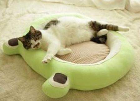 Лежанка лягушка для кошки