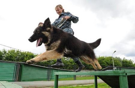 Полиция и собаки
