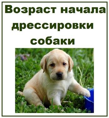 Возраст начала дрессировки собаки