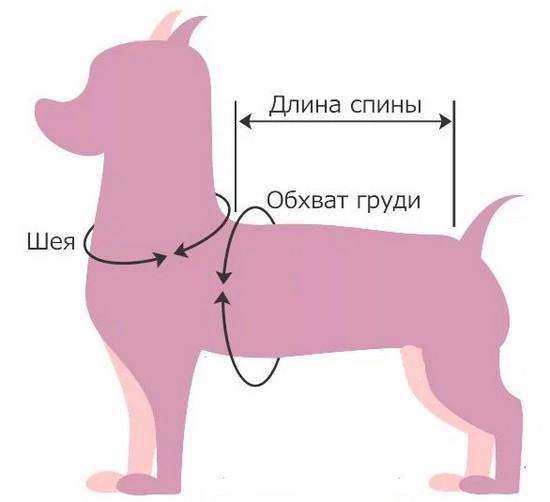 Измеряем собаку