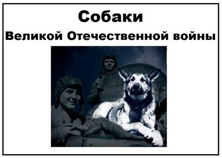 Собаки ВОВ