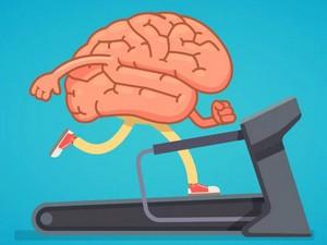 Мозг развивается
