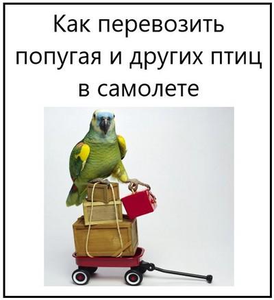 Как перевозить попугая и других птиц в самолете