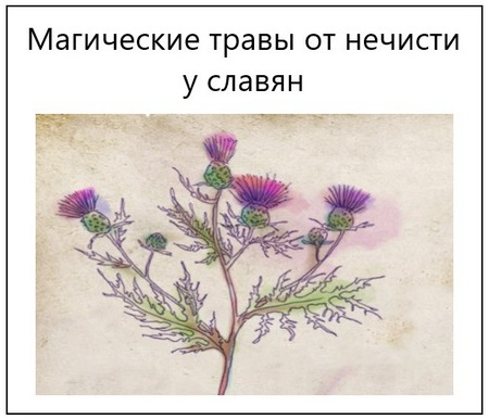 Магические травы от нечисти у славян