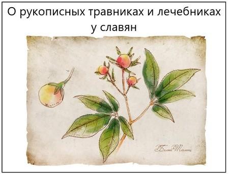 О рукописных травниках и лечебниках у славян