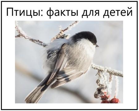 Птицы факты для детей