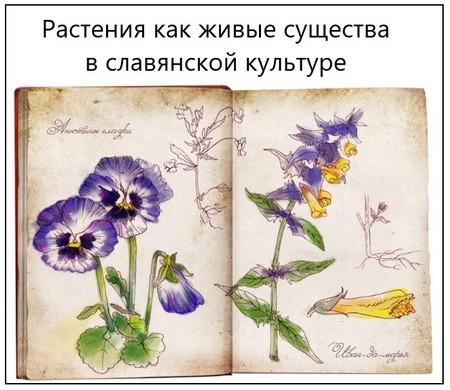 Растения как живые существа в славянской культуре