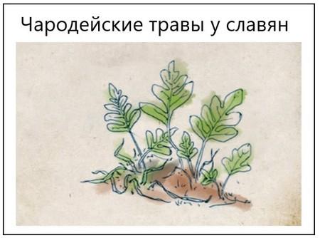 Чародейские травы у славян