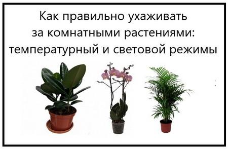 Как правильно ухаживать за комнатными растениями температурный и световой режимы